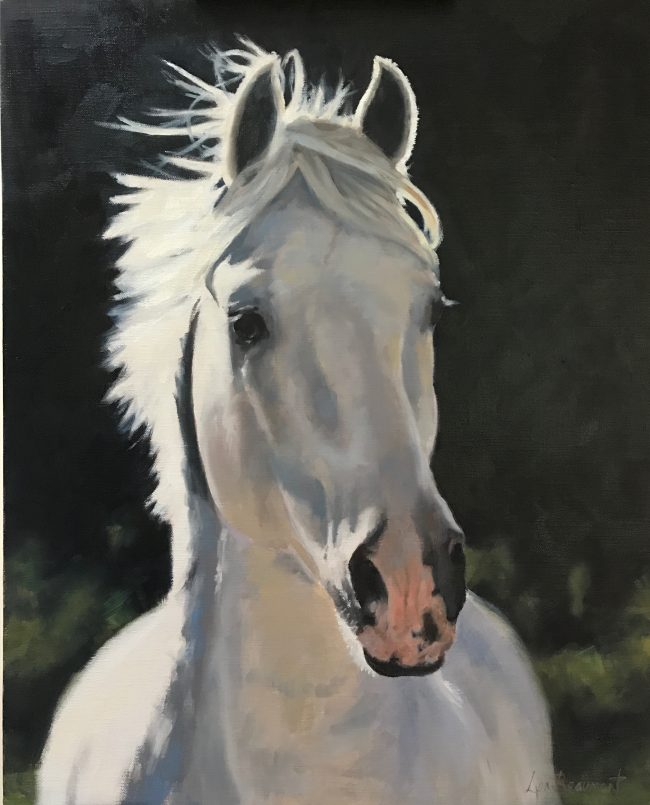 Lyn-Beaumont-artist-Equine-Cabelleriza-Mateo-II-50x60cm-Commission